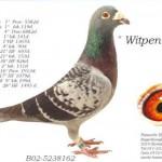 B02-5238162 Witpen 162