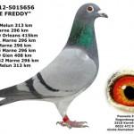 BE-12-5015656 DE FREDDY