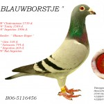 Blauwborstje B06-5116456