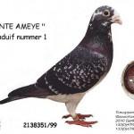 Bonte Ameye B99-2138351