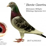 Bonte Geerinckx B07-6390303