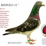 Broer Manolo B05-8015067