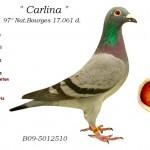 Carlina B09-5012510