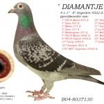 Diamantje B04-8037130