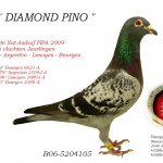 Diamond Pino B06-5204105