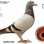 Gaston B06-6409372