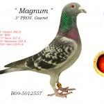 Magnum B09-5012557