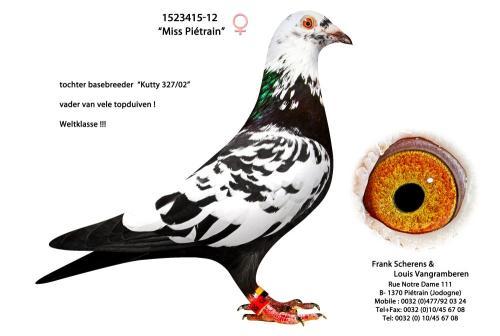 """1523415-12 """"Miss Pietrain"""""""