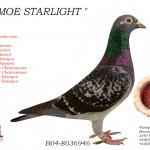 Moe Starlight B04-803646
