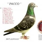 Pacco B07-2249335