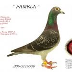 Pamela B06-5116538