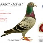 Perfect Ameye B06-5204134