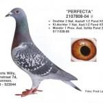 Perfecta 2107808-04