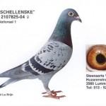 Schellenske 2107825-04