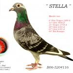 Stella B06-5204116