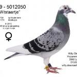 Witstaartje B09-5012050