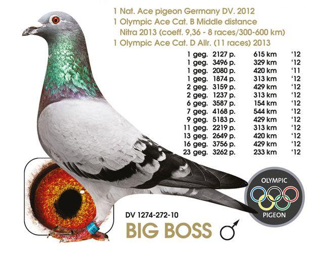 herbots big boss