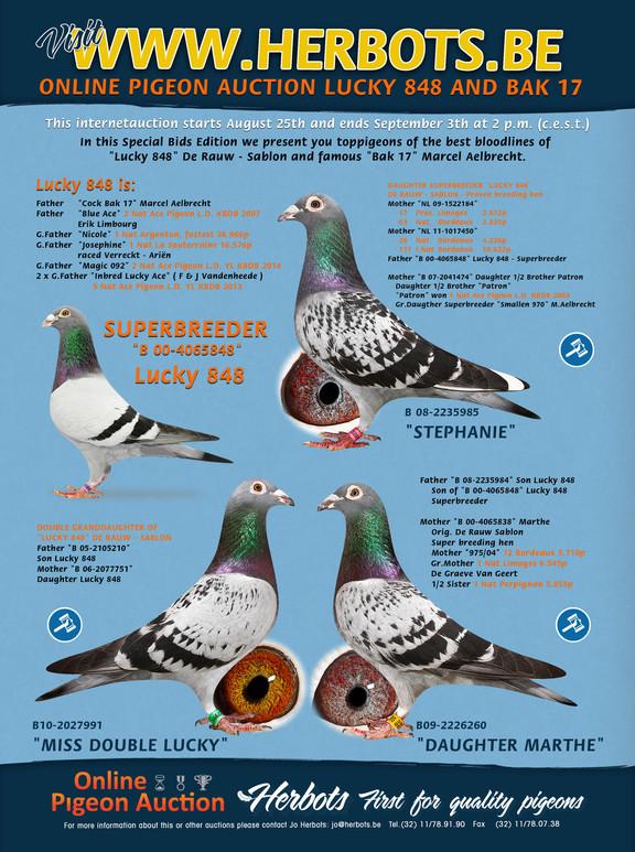 pigeon auktion herbots