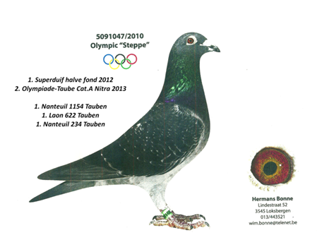 """5091047/2010 OLYMPIC """"STEPPE"""""""