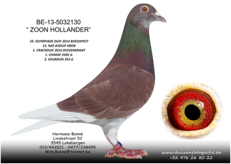 "BE-13-5032130 ""ZOON HOLLANDER"""