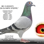 bonne_zoon_olympic_steppe
