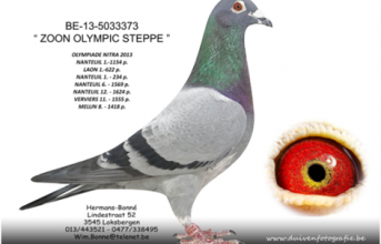 "BE-13-5033373 ""ZOON OLYMPIC STEPPE"""