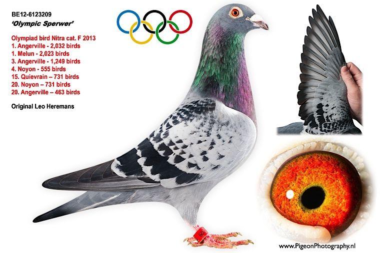 heremans olympic sperwer