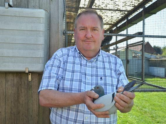 DIRK Van Dyck - Zandhoven (B) - hodowcy gołębi wyjątkiem w INTERNATIONAL SPORT