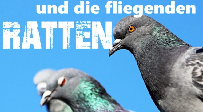 Erster Taubenkrimi:  Almut und die fliegenden Ratten...