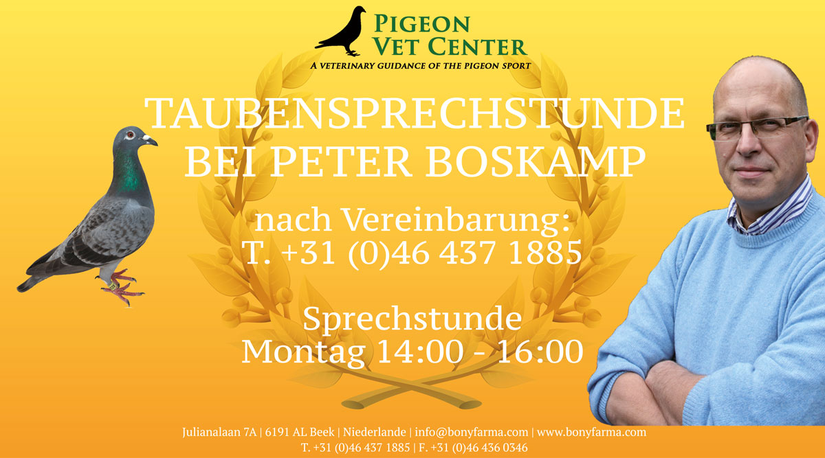 Pigeons forest camp-surgery-and-on-appointment-German