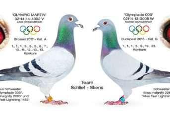 Team Schlief-Stiens (Oelde, DE) - 55x den 1. Preis in den letzten fünf Jahren...