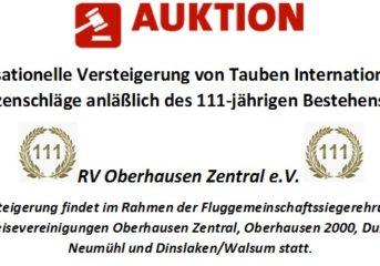 Sensationelle Versteigerung von Tauben Internationaler Spitzenschläge...