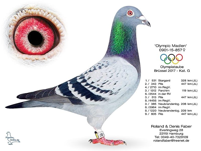 法贝尔奥运madlen 0901-15-857