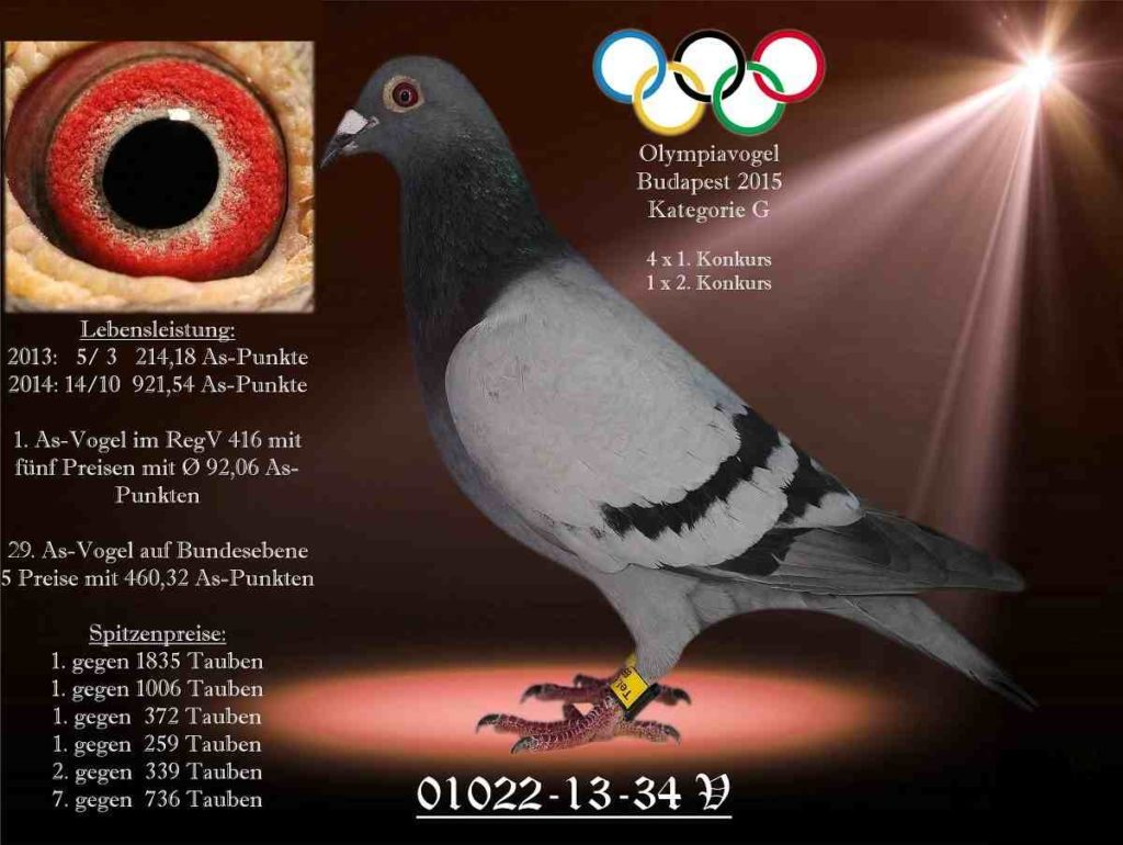 Feldotto olympiavogel 34