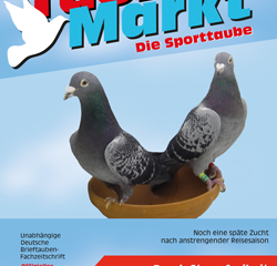 TaubenMarkt/Die Sporttaube August 2019...
