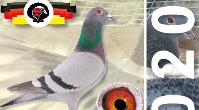 EXKLUSIV - Die neue KLAUS Taubenpost 2020...